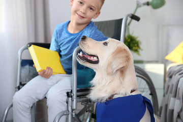 Boy in wheelchair reading book with service dog by his side indoors
