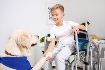 Boy in wheelchair with service dog indoors