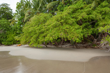 Sand beach and trees at Manuel Antonio Costa Rica