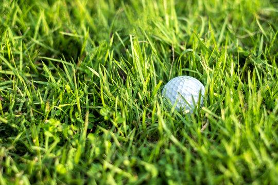 Golf Ball Nestled in the Grass