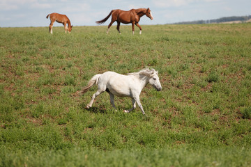 Horses on a green field