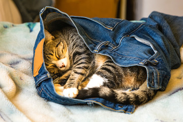An adorable kitten sleeping in someones blue jeans on a bed