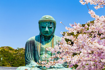 The Great Buddha in Kamakura Japan.The foreground is cherry blossoms.Located in Kamakura, Kanagawa Prefecture Japan.