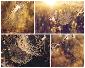 Spider's web on blurred background. Collage.