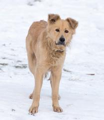 Portrait of dog on snow in winter
