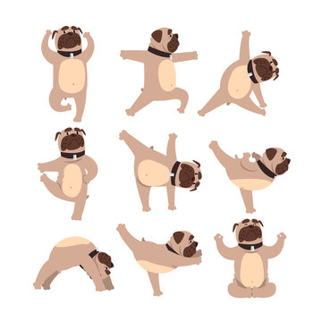 Funny bulldog in different poses of yoga. Healthy lifestyle. Dog doing physical exercises. Cartoon domestic animal character. Colorful flat vector design