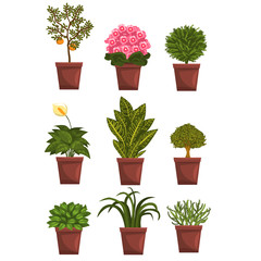 Set of pot deciduous, flowering, fruit plants with flowers and leaves. Anthurium, mandarin, violet, bonsai, pipal. Home natural elements. Vector isolated on white.