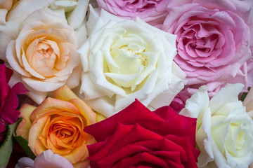 A beautiful bouquet of colorful, fragrant, open roses.