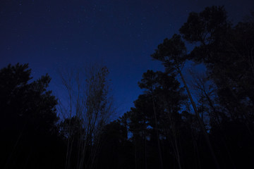 Starry North Carolina night