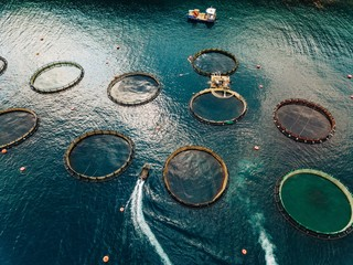 Salmon fish farm with floating cages. Aerial view