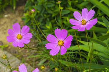 purple flower on a background of greenery