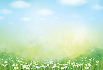 Vector summer,  green,  nature  background, daisy  flowers field.