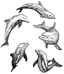 Vector ink hand drawn dolphin icon set