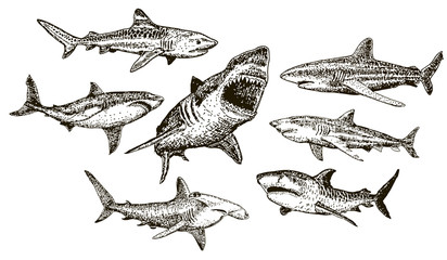 Vector ink hand drawn shark icon set