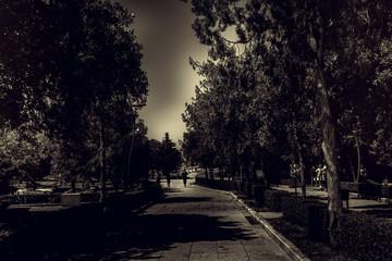 ein weg zwischen Bäumen Schwarz-Weiß-Fotografie