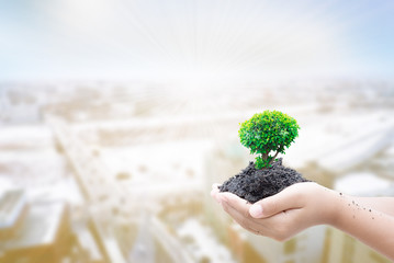 hand holding tree on blurred city background, safe world conception