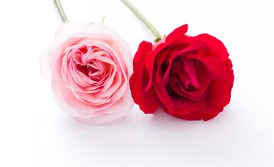 Red & Pink rose flower