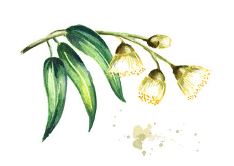 Eucalyptus branch with leaves and flowers. Isolated on white background. Watercolor hand drawn illustration Wall mural