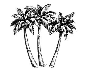 Palm sketch hand drawn