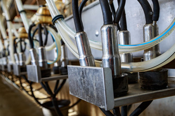 close-up of an automatic milking machine in a dairy cow farm