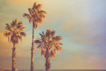 Palm Trees at Seashore Dramatic Beautiful Blue Pink Peachy Sky at Sunset. Pastel Colors Flare 60s Vintage Toning.Calm Sea Horizon. Tropical Vacation Traveling Asia Caribbean Mediterranean. Copy Space