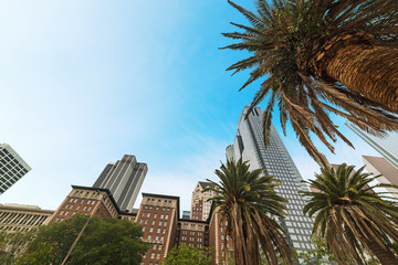 Wall Mural - Palm trees and skyscrapers in downtown Los Angeles