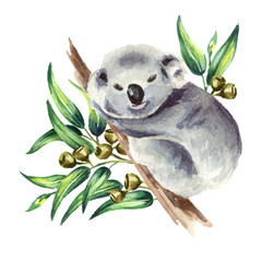 Little Koala bear sitting on eucalyptus branch, isolated on white background. Watercolor hand drawn illustration