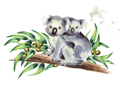 Koala bear with baby sitting on eucalyptus branch, isolated on white background. Watercolor hand drawn illustration