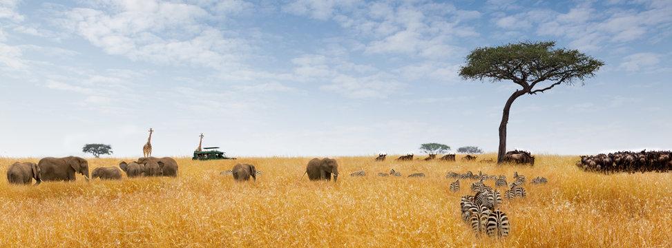 African Dream Scene Web Banner