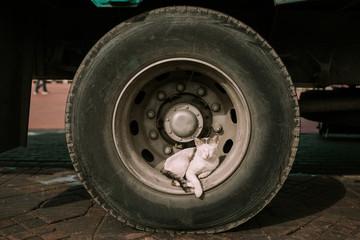 Cat lying on a wheel