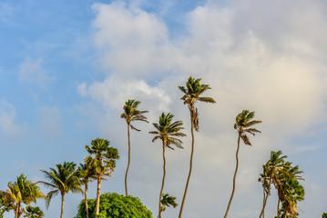 Palm trees against the blue sky. Tropical landscape.