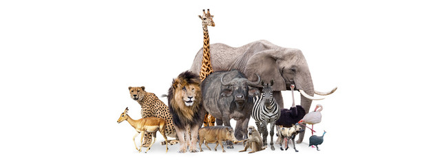 Fototapete - Safari Animals Together Isolated Banner