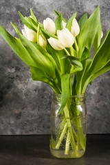 White tulips in glass jar. Gray background.