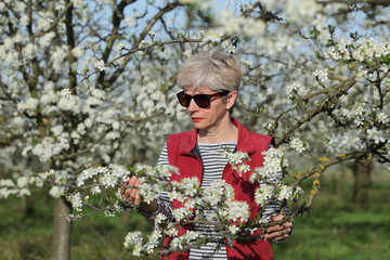 Farmer or agronomist examining blossoming plum orchard