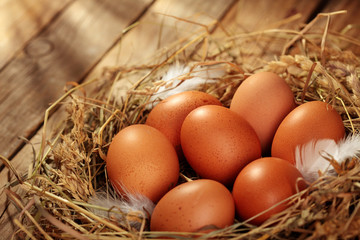 Chicken eggs in the nest. On wooden rustic background.Copy space