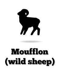Moufflon (wild sheep) vector icon. Good for logo, print, emblem, badge, label and etc.