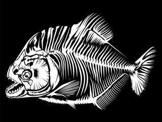 Piranha isolated on black