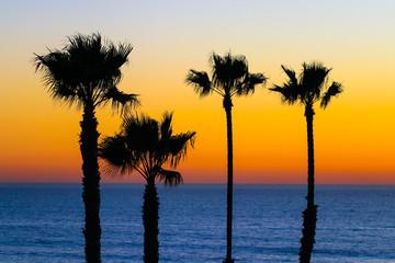 Four Palm Trees