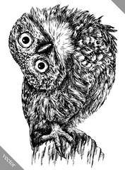 Wall Murals Owls cartoon black and white engrave isolated owl vector illustration