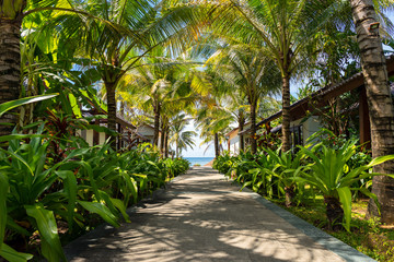 Beautiful tropical place in Vietnam. Path to the beach under green palm trees