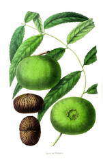Illustration of palnt.