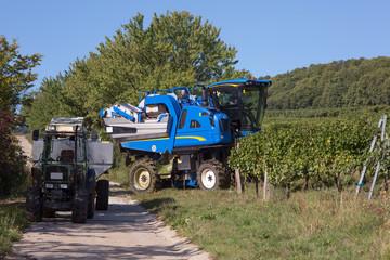Harvesting machine in vineyard