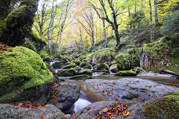 Photo sur Aluminium Kaki Belles couleurs d'automne dans les pyrénées