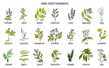 Herbal therapy for bronchitis