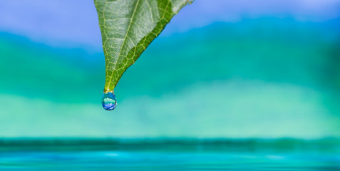rain droplet falling from a leaf photograph