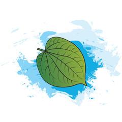 betel leaf over blue brush strokes vector illustration
