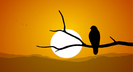 Silhouette of Buzzard sitting on a dry branch against the setting sun.