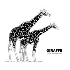 Two isolated Giraffe. Line design. Silhouette