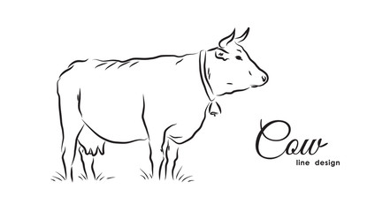 Hand-drawn isolated Cow on white background. Line design