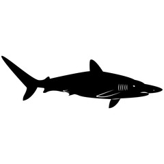 Vector image of a shark silhouette on a white background